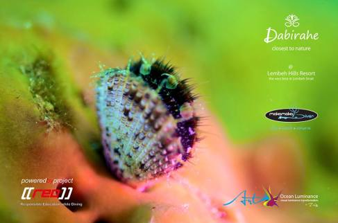 Dive Lembeh with Makamaka Diver