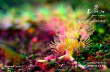 Dive Lembeh with Makamaka Diver Lembeh, Scuba diving in Lembeh at its best