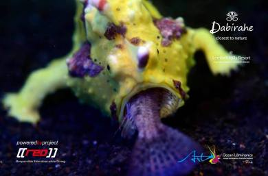 Dive Lembeh, Scuba Diving Lembeh
