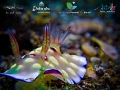 Dive Lembeh Straits with Makamaka Diver Lembeh