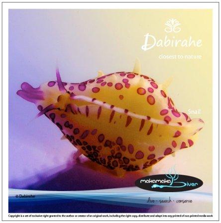 Dive Lembeh, Scuba Diving Lembeh