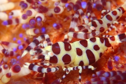 dive lembeh critters